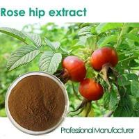 Buy cheap Factory Rosehip Seed Oil,Rose Hips Seed Oil , Rose Hips Oil from Wholesalers