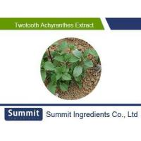 Buy cheap Twotooth achyranthes extract 10:1,radix achyranthis bidentatae,Achyranthes bidentata,Twotooth Root from Wholesalers