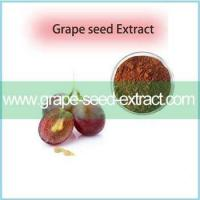 Buy cheap Best Pirce Grape Seed Extract Of Resveratrol CAS 501-36-0 With Excellent Quality from Wholesalers