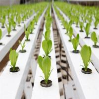 Buy cheap Agricultural Greenhouse Flat Hydroponics commercial hydroponics from Wholesalers