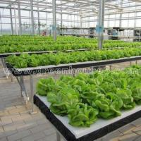 Buy cheap Greenhouse DFT Hydroponic Cultivation System for Planting from Wholesalers