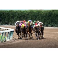 Buy cheap Jockeys Riding Horses Wallpaper for Android, iPhone and iPad from Wholesalers