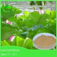 Buy cheap Weight Loss Lotus Leaf Extract from Wholesalers