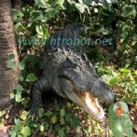 Buy cheap Simulate animals and insects crocodile from Wholesalers