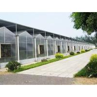 Buy cheap greenhouse: Sunshine Plate Greenhouse from Wholesalers