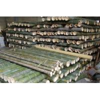 Buy cheap Screw Series Fresh Bamboo Pole from wholesalers